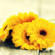 Felnőtt színező - színek - sárga